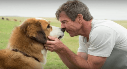 Jodi's Blog: The upsetting on-set footage from 'A Dog's Purpose'