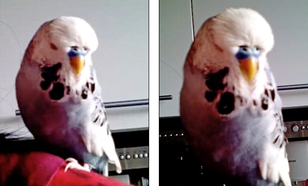 Woah! This Bird Sounds Just Like R2D2