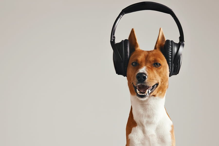 Audio Books….for Dogs!