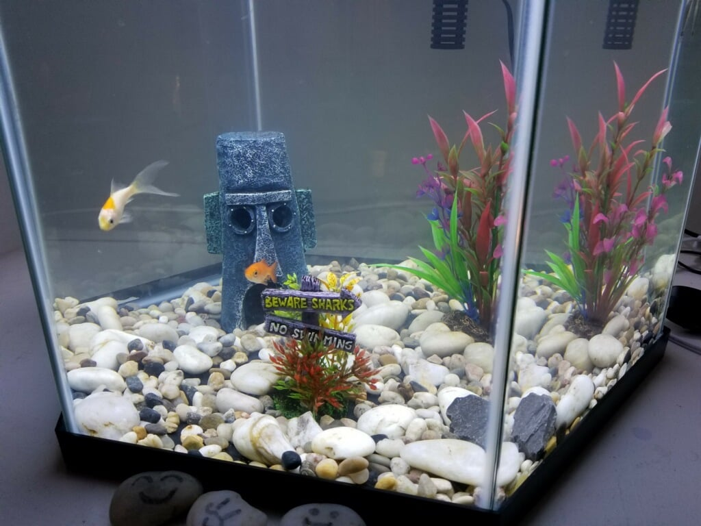AFTER THE SHOW:  A New Fish Tank